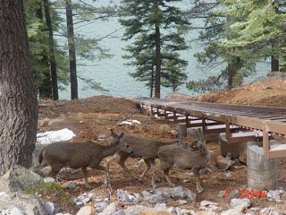 Deer In Front Of Inclined Lift Rail Section