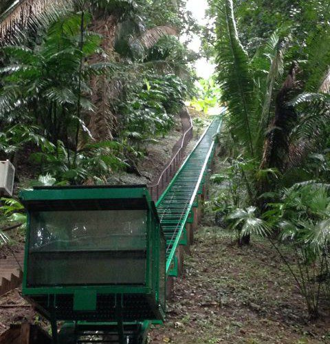 Belizian Jungle Tram / Incline Lift Project cutting through 505 ft of lush rainforest hillside